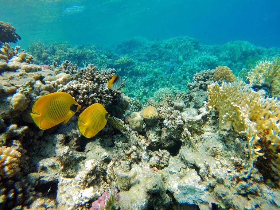 rafy koralowe w Marsa Alam