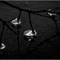 Perlen - Bild 280/365