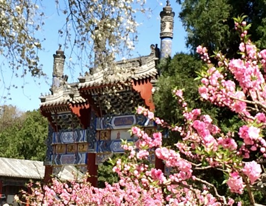 Summer Palace blossom and gate