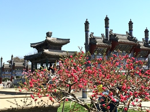 Summer Palace gate and blossoms