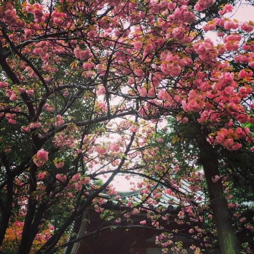 nara blossoms