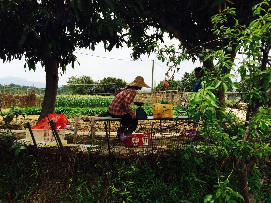 New Territories farmer woman