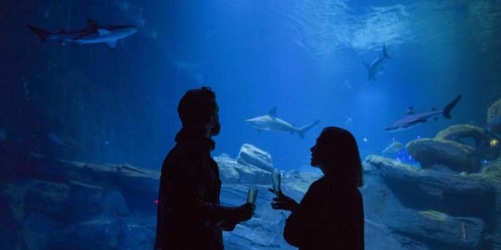 Aquarium-de-Paris-Privateaser