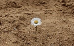 Einsam im Sand