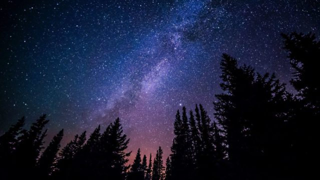 Dark night sky with lots of white stars in the sky, pine trees at the bottom of the image.