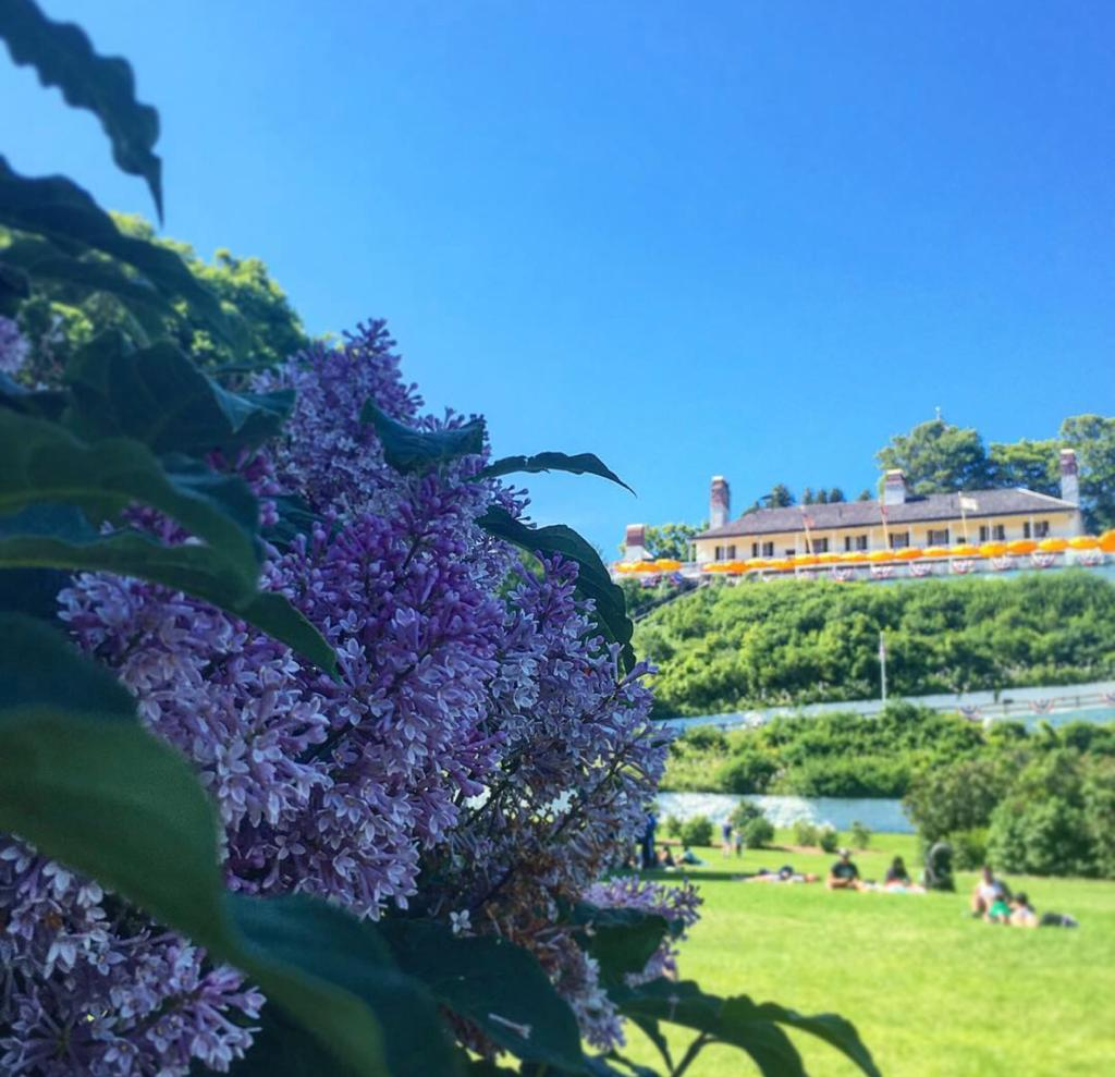 Lilacs Mackinac Island with mansion in the background