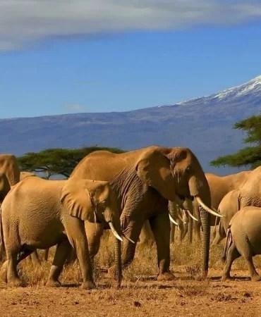 Calendar Kenya