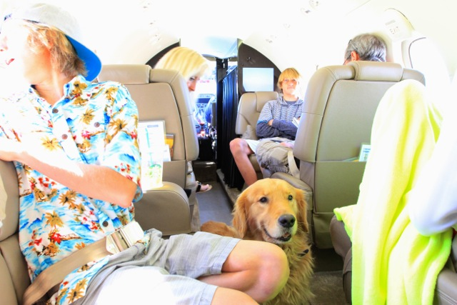 Dog on a Private Jet