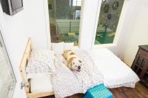 Dog Boarding Checklist Jet Pet Resort
