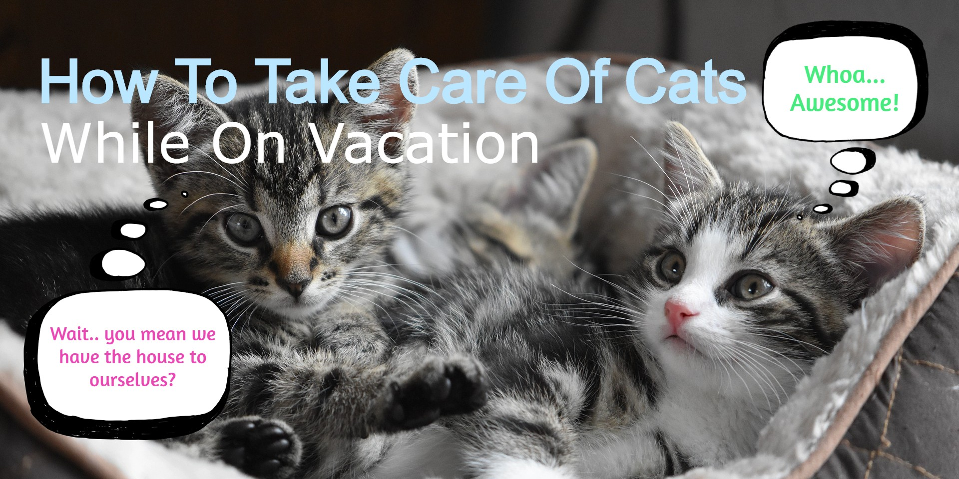 Complete Guide To Leaving Your Cat Home Alone While On Vacation