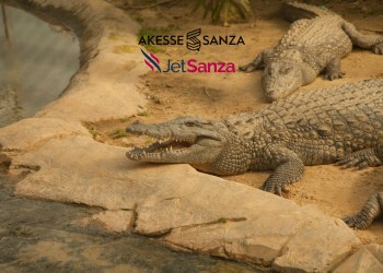 Crocodile resting at Johannesburg zoo, South Africa