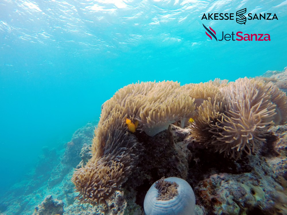 Discover ocean creatures through Scuba-diving in Maldives