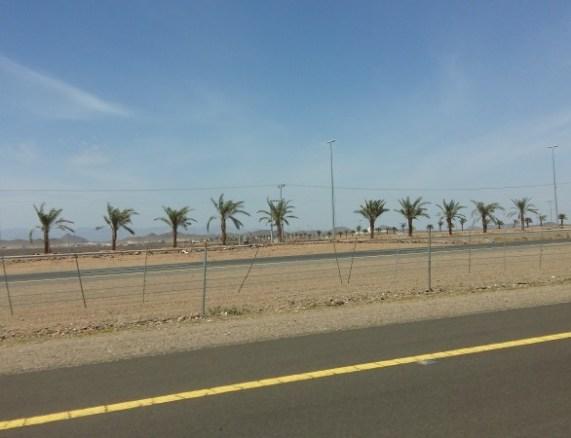 saudi-arabia-desert-road-trip