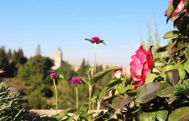 alhambra-travel-tips-spain-36