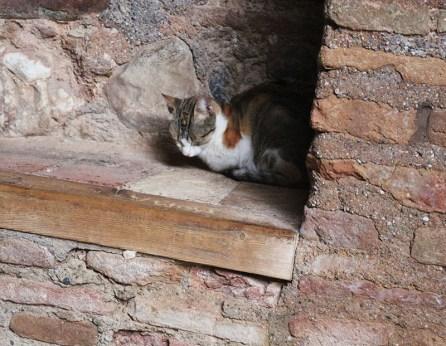 alhambra-travel-tips-spain-8