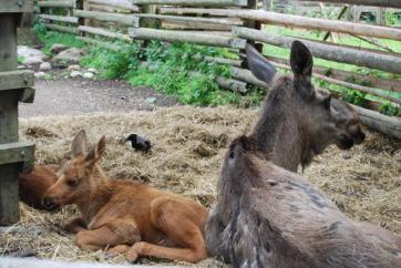 skansen-animals