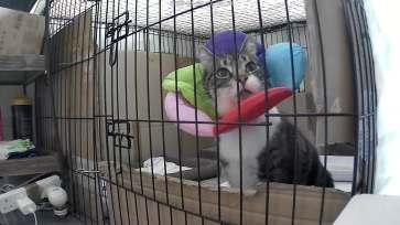 Hugo le chat 1