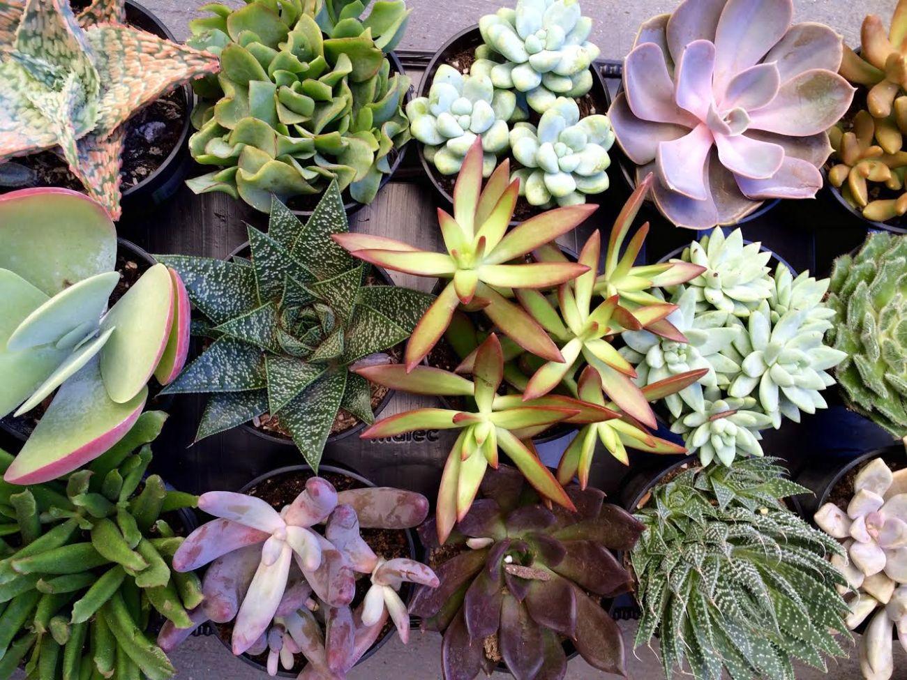 Succulents | Drought-Friendly Plants #EveryDrop