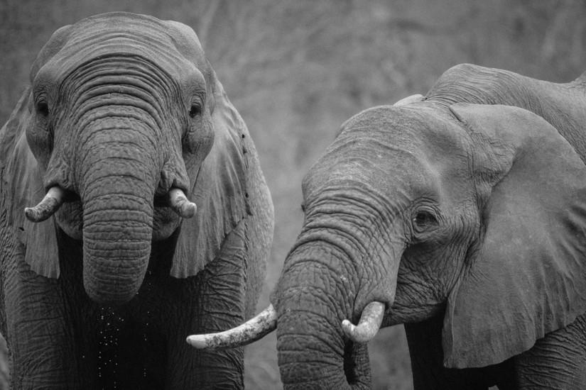 African River Cruise - Safari Elephants