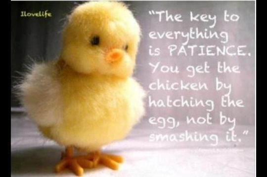 patience chick quote pinterest