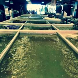 Addiction Aquatic Development Taipei