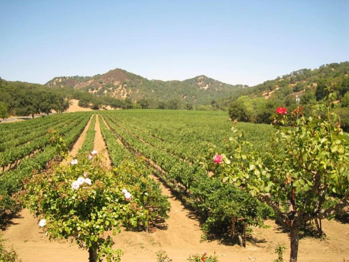 Napa Capp Heritage Vineyards