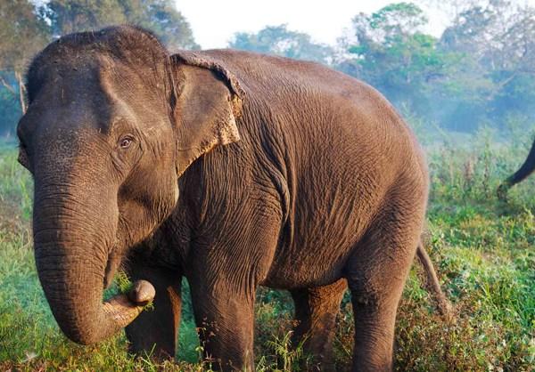 four seasons golden triangle thailand elephant