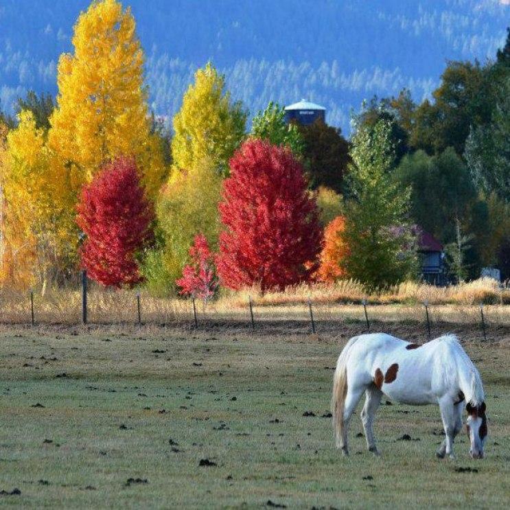 Oregon Fall Foliage Facebook horse