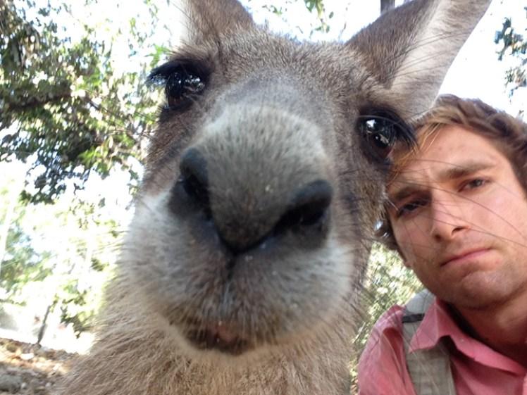 Port Douglas Australia kangaroo