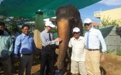 Sambo Cambodia elephant retire