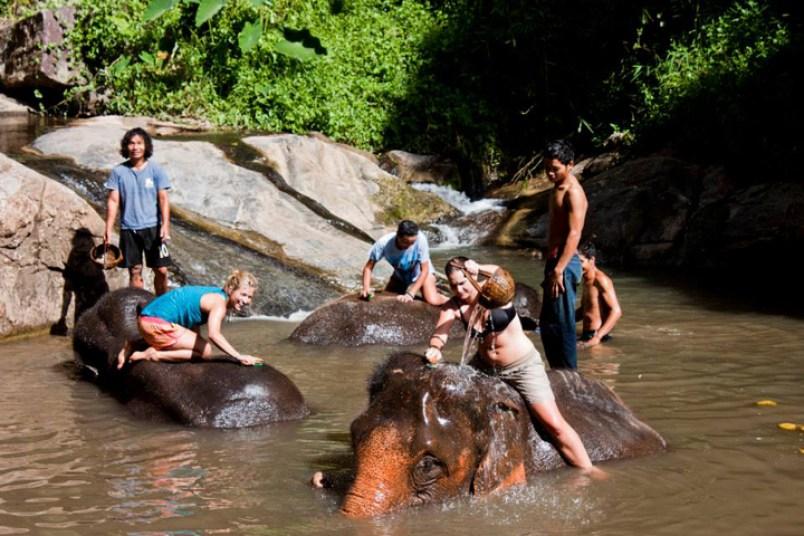 Elephant trekking Chiangmai Thailand 4