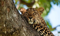 South Africa: Experience the best of South Africa on a trip that combines vibrant Cape Town and the Cape Peninsula, the dramatic southern coast of the Western Cape and a wildlife safari in a world-renowned private game reserve adjacent to Kruger National Park. (Photo credit: National Geographic)