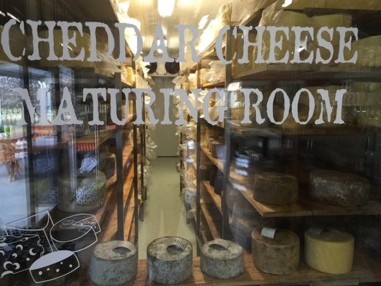 Tasmania cheese