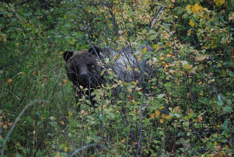 Facebook Teton National Park bears