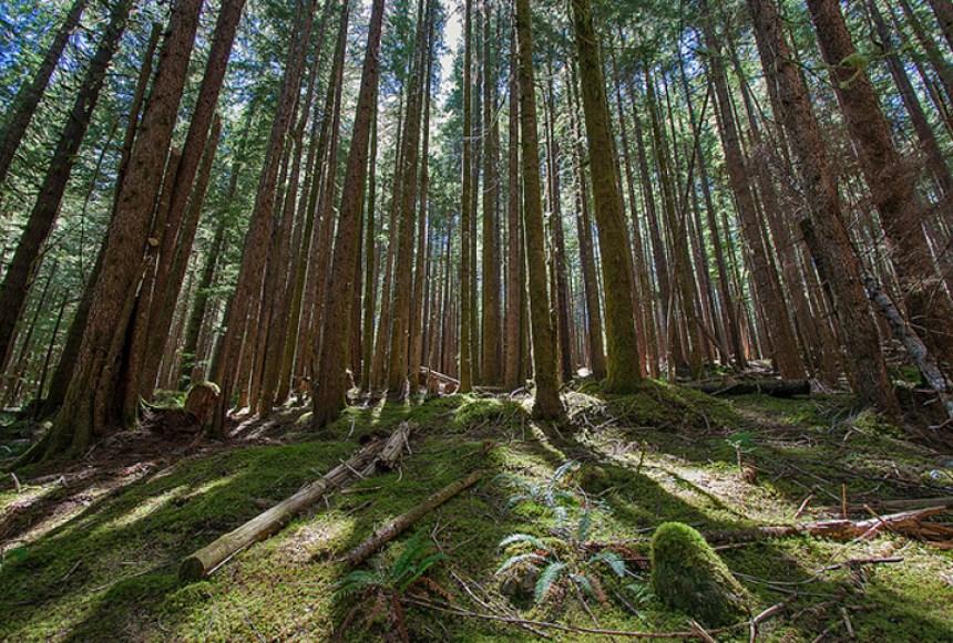 Flickr Ralph Arvesen Olympic National Park Washington