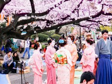 Cherry blossom viewing at Ueno Park (spring only) - Or, hanami. Japan is known for its beautiful cherry blossoms that decorate the entire country throughout months of spring. Ueno Park is especially lovely during this time of the year. Do not miss out! METRO STATION: Ueno station/Ginza line, Hibiya line, JR Utsunomiya line (Tohoku Main Line), JR Takasaki line, JR Keihin-Tōhoku line, JR Yamanote line, JR Jōban Line. (Photo credit: Flickr/Dick Thomas Johnson)