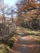 Trail To Lago Torre