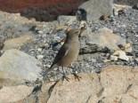 Bird watching At Lago Torre