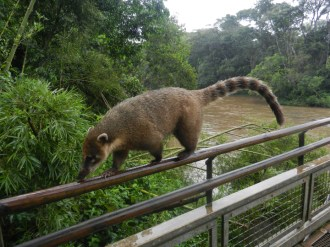 Opossum 'tight-roping' along one of the catwalks