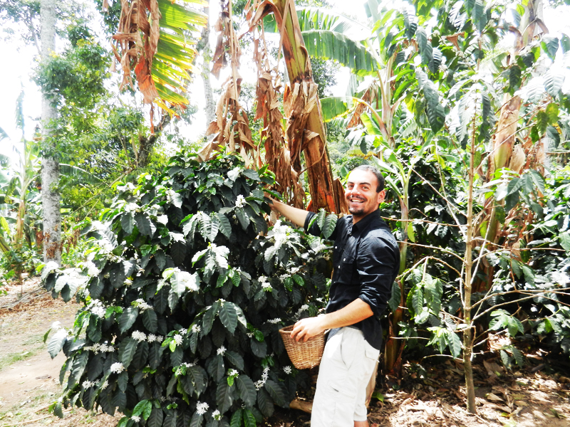 2-picking-coffee-beans-at-a-local-finca-coffee-farm-in-salento