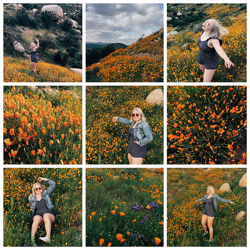 Superbloom Poppies