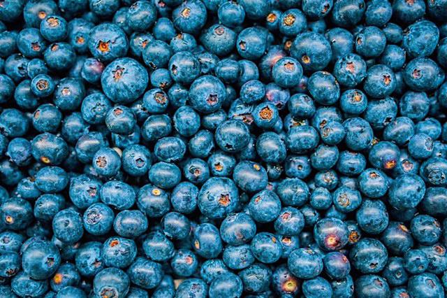 Foraged blueberries! photo-Saison.