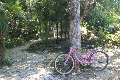 The Jungle Spa Bike