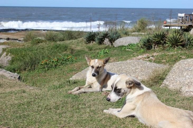 Stray dogs in Punta del Diablo: Making new Friends JetSetting Fools