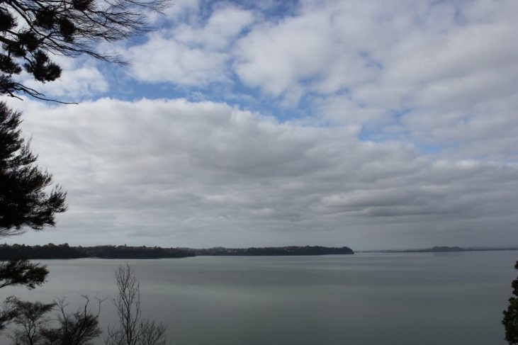 View from Opou Reserve in Titirangi, Auckland, NZ