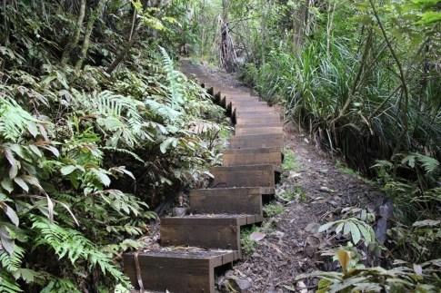 Stairs on Zig Zag Track in Titirangi, Auckland, New Zealand