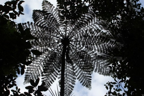 Tree canopy on Zig Zag Trail in Atkinson Park in Titirangi, Auckland, New Zealand