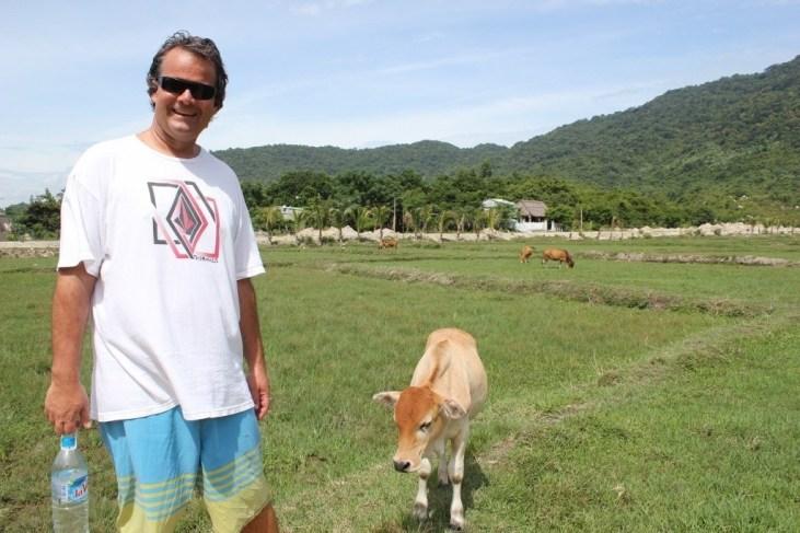 Cow on Cham Islands, Vietnam
