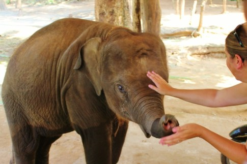 Petting a baby elephant in Chiang Mai, Thailand