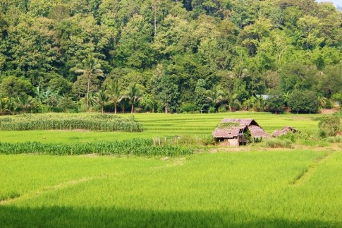 Rice fields and hut in Chiang Mai, Thailand